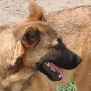 Streunerhilfe e.V. | Nubio