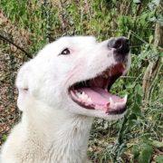 Streunerhilfe e.V. | Dingo